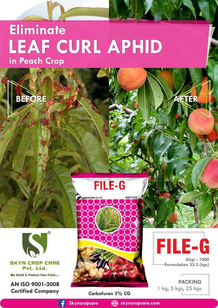 Carbofuran 3% CG, Leaf Curl Aphid