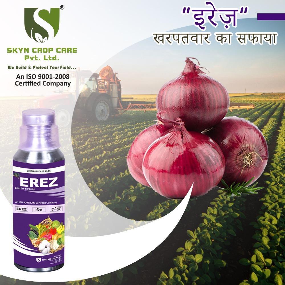 Erez (Oxyfluorfen 23.5% EC), fat hen weed, bathua,